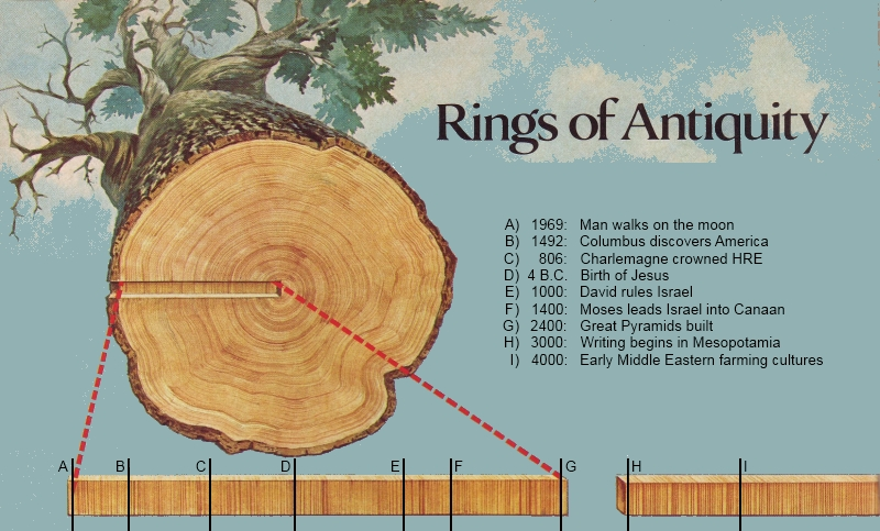Cross dating tree rings
